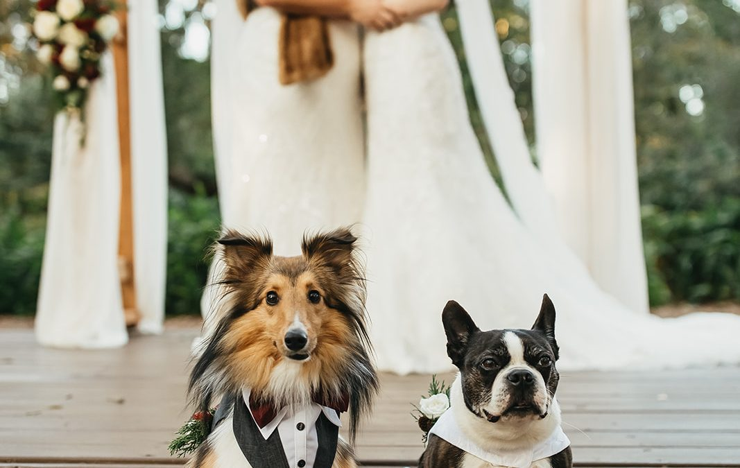 How To Include Your Pet At Your Wedding